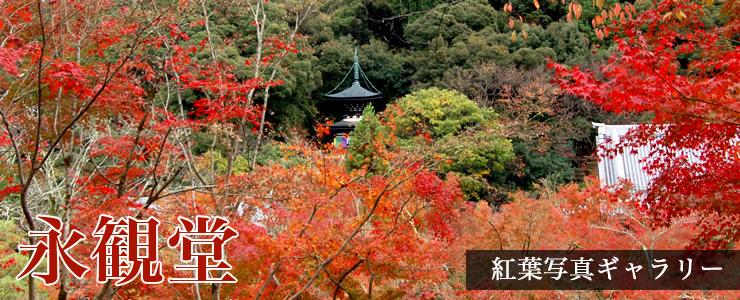 2016年京都の永観堂の紅葉の写真速報