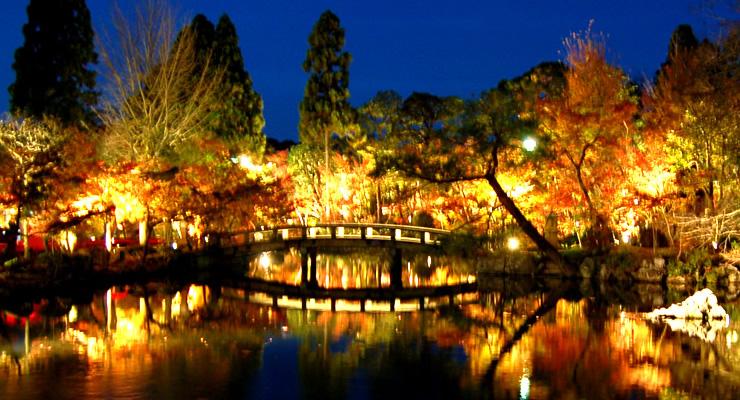 京都紅葉ライトアップ
