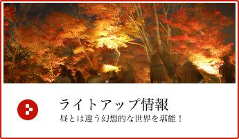 京都ライトアップ2018 夜の紅葉