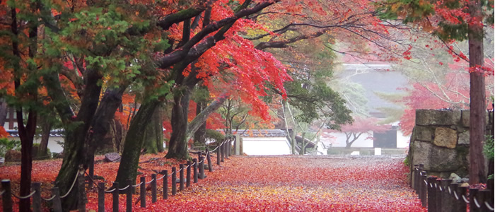 京都紅葉おすすめ散歩コース