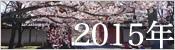 2015年桜ギャラリー
