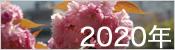 2020年桜ギャラリー