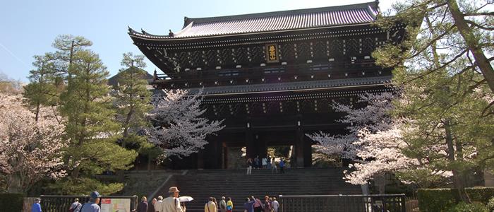 京都の知恩院の桜2016