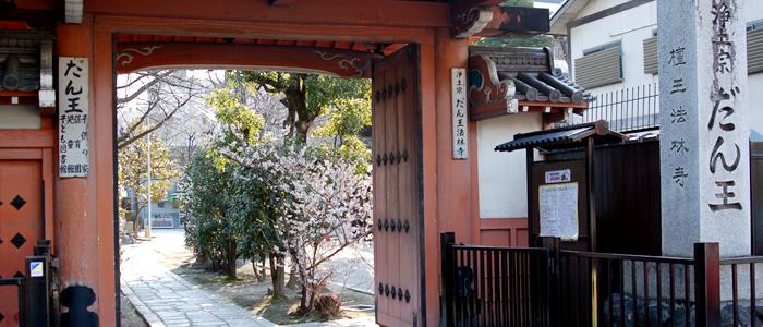 京都の壇王法林寺の桜2017