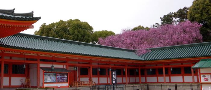 京都の平安神宮の桜2017