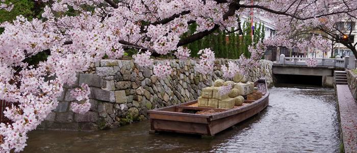 京都の木屋町高瀬川の桜2017