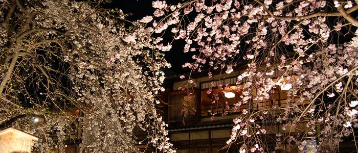 京都夜桜ライトアップ