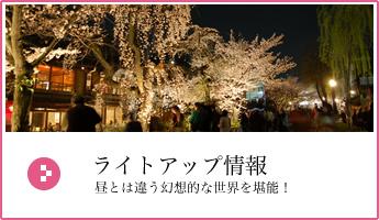 京都夜桜ライトアップ2018