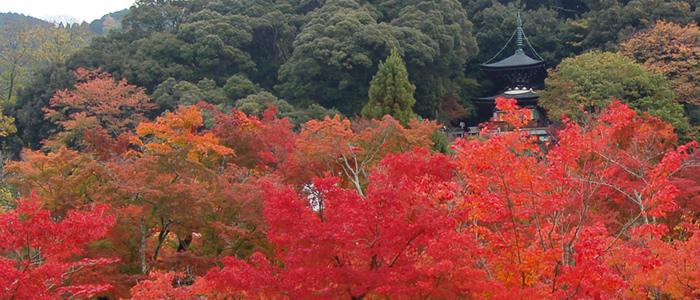 京都紅葉 東山