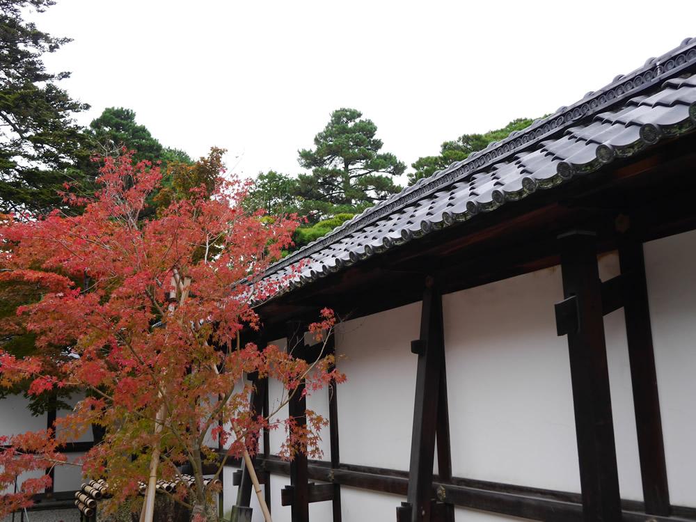 京都御所11月2日