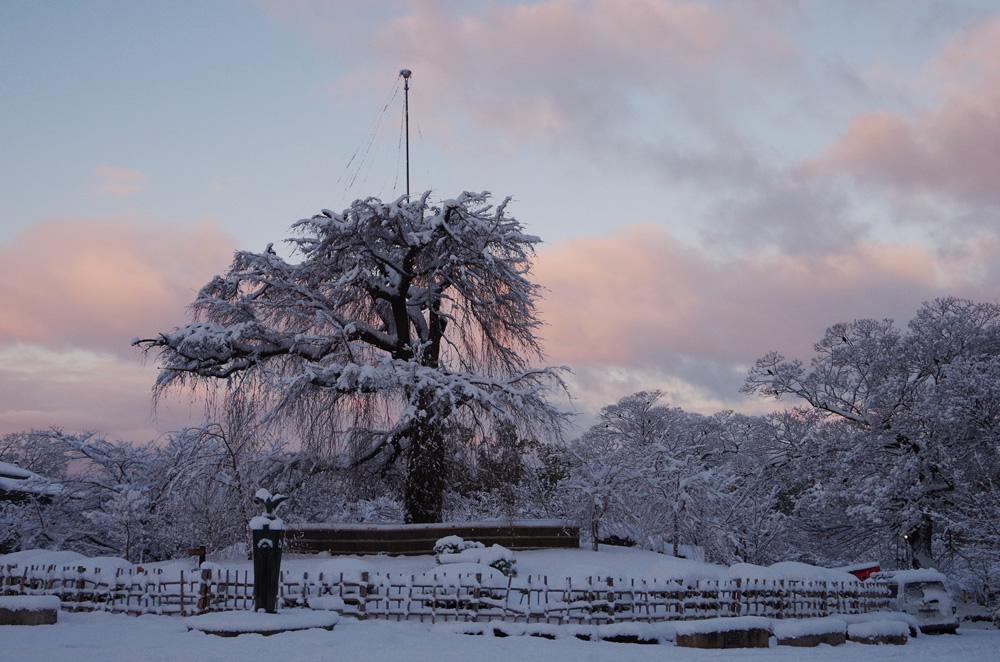 円山公園の雪