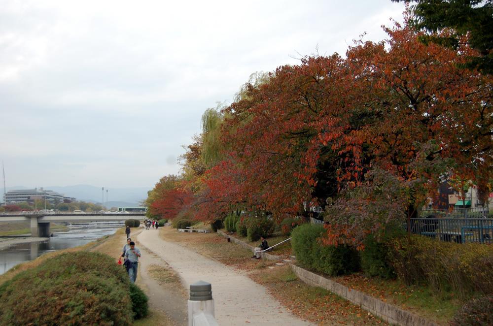 2015年11月7日 鴨川の紅葉 | 京...